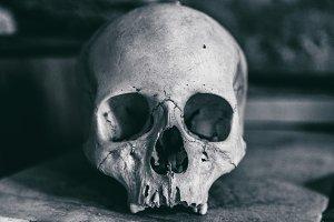 Dramatic Human skull