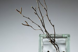 Vase with Willow Twigs