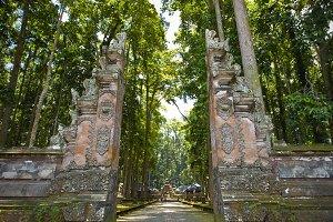 Monkey forest, Bali (Sangeh)