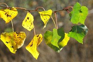Closeup of Tree Leaves