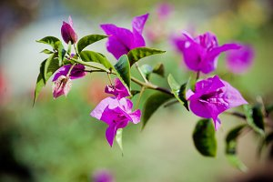asian flower in Bali