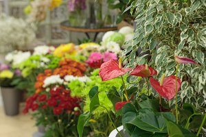 Flowers and plants in a flower shop
