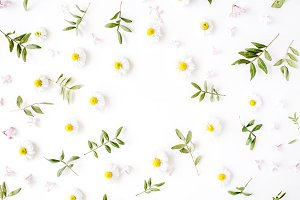 Floral frame with chamomile buds
