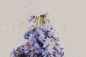 Fresh lavender bunch