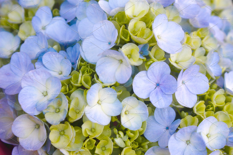Beautiful Close Up Blooming Flowers Nature Photos Creative Market