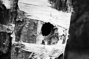 Tree Nest - B&W