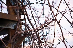 Rusty Metal & Vines
