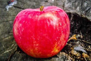 Apple red fruit on wood background