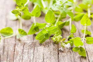 Oregano green twigs
