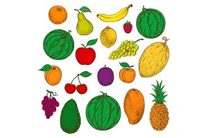 Flavorful tropical fruits sketches