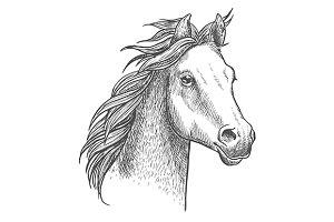 Foal of arabian breed sketch