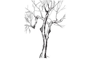 drawing old-style tree