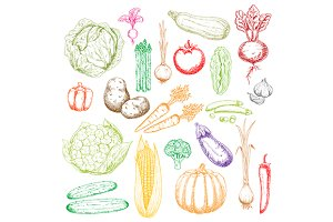 Fresh vegetables sketches