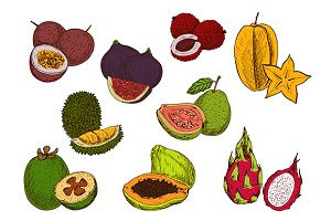Sketched tropical fruits