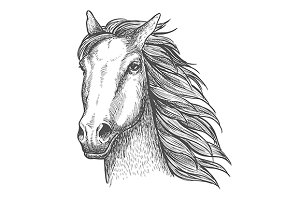 Racehorse stallion sketch