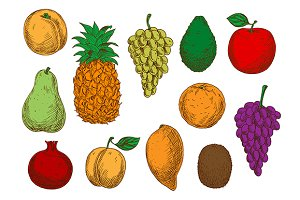 Sketched ripe fruits