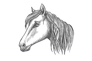 Riding horse head sketch