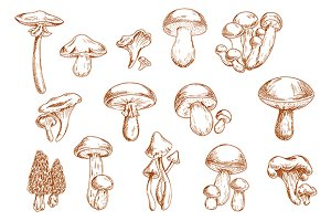 Edible mushrooms sketches