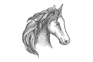Sketched horse head