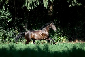 Lusitano of rare beauty