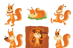 Squirrel vector set collection