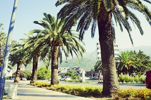 Tropical trees and bushes in Budva