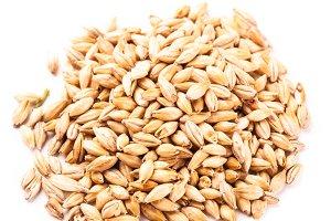 wheat grain isolated