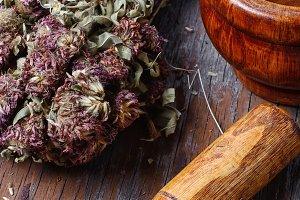 Medicinal plant Hypericum