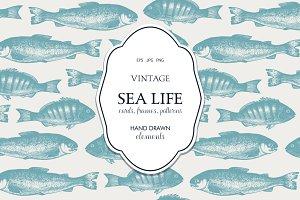Vinatge SeaLife Design