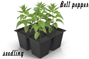 Seedlings of bell pepper