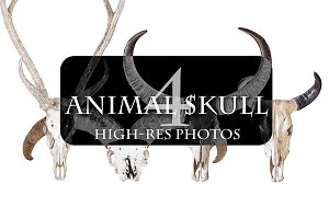 4 high-res Animal skulls photos