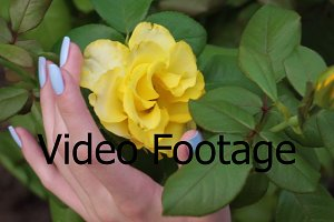 Female hand touching yellow rose