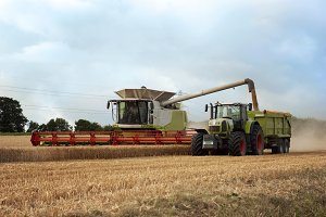 Combine harvester in wheat field
