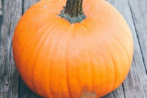 authentic field pumpkin