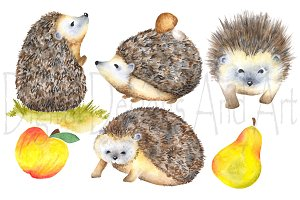 Watercolor hedgehog clipart