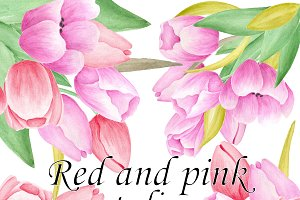 Pink and red watercolor tulips