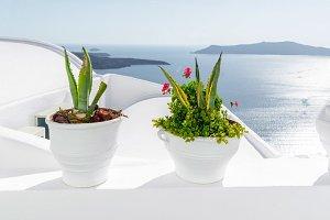 Flowers, Santorini, Greece