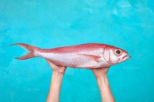 Big tropical fish on sea background