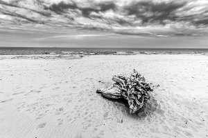 Beach landscape in black and white.