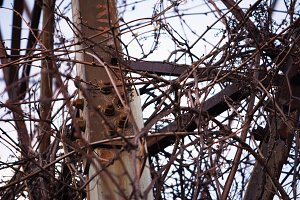Metal, Bolts, and Vines