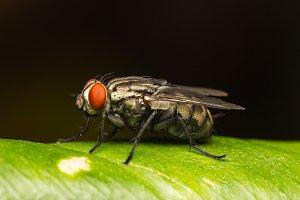 Macro small flies