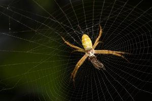 Macro spider nests