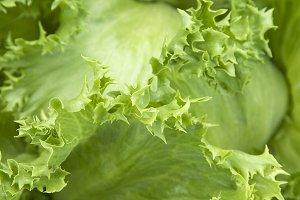 Lettuce head macro