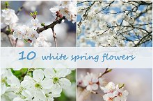 Bundle of 10 white spring flowers