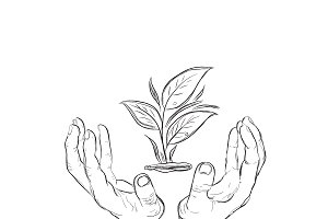 hands holding plant, sketch