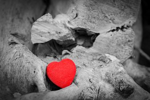 Red heart on a tree trunk.