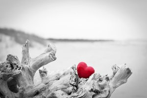 Red heart in a tree trunk.