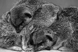 Sleeping Meer's