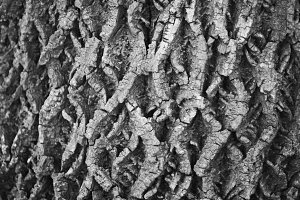 Tree Bark, B&W, texture, nature