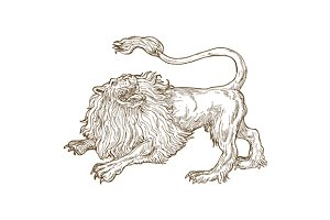 Lion Big Cat Sketch